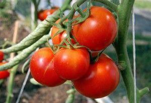овощи из теплицы из поликарбоната