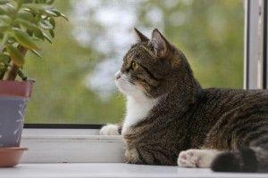 Подоконник и кот